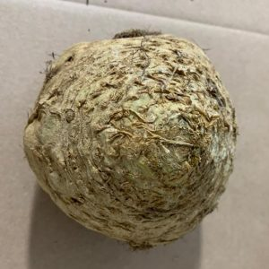 British Celeriac